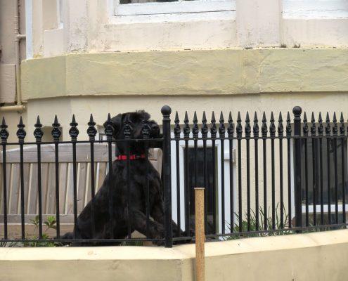 Hund und Herrlich_Whitby