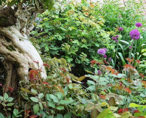 Hund und Herrlich_Bodnant Garden