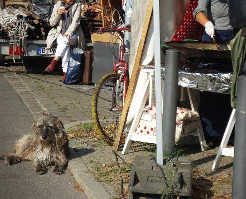 Hund und Herrlich_Nowkoelln