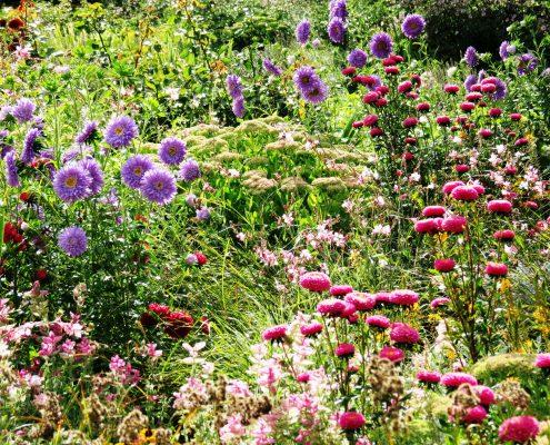 Hund und Herrlich_Planten un Blomen