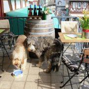 Hund und Herrlich_Braunfels