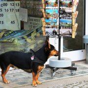 Hund und Herrlich_Berlin_Zimmerstrasse