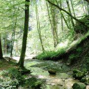 Hund und Herrlich_Rundwanderung-Oberwetzikon-Ringwil-Hinwil-Ettenhausen-Oberwetzikon