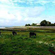 Hund und Herrlich_Irland_Ballyvaughan