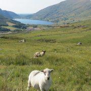 Hund und Herrlich_Grossbritannien_Wales_Snowdonia Nationapark_Rhyd Ddu