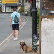 Hund und Herrlich_Grossbritannien_England_Lake District_Windermere