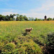 Hund und Herrlich_Grossbritannien_England_Lake District_Ambleside