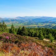 Hund und Herrlich_Grossbritannien_England_Lake District_Whinlatter Forest Park